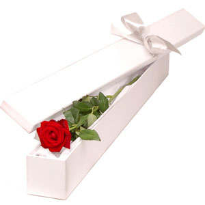 (27)1 piece red rose in a box